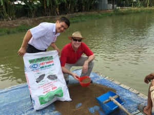 Feeding snakehead in southern Vietnam
