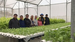 Aquaponics linked to IPRS aquaculture systems in Vietnam