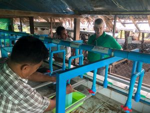 WorldFish Supported Tilapia Hatchery